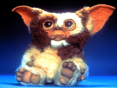 No, they named him Mowgli, not Mogwai...