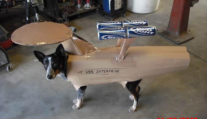 startrekdog